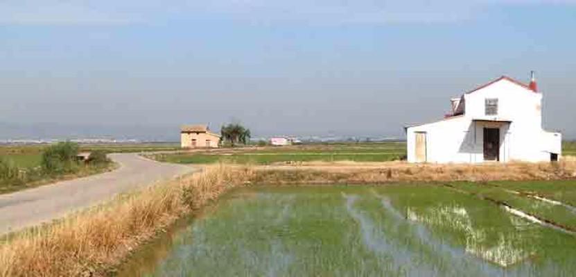 Die spanischen Reisfelder befinden sich im Naturpark Albufera