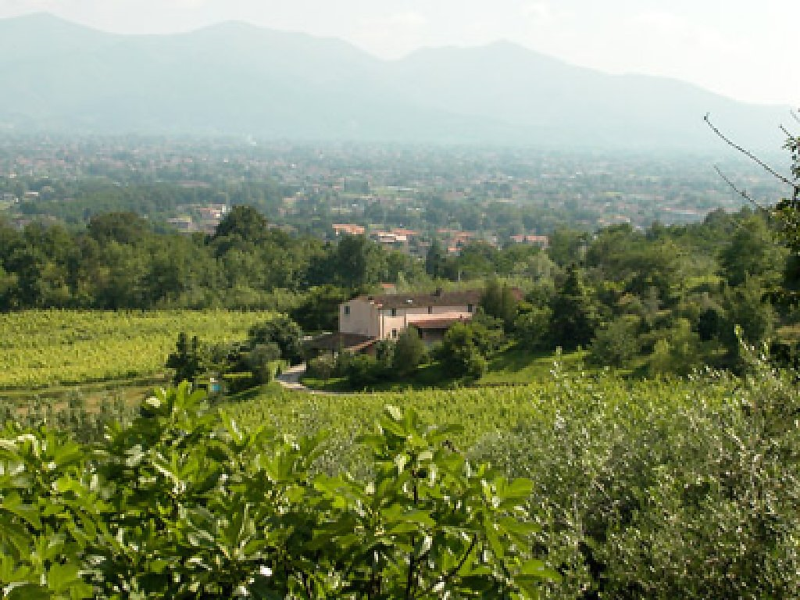 Nardinello 1414387,Villa  con piscina privada en Lucca, en Toscana, Italia para 12 personas...