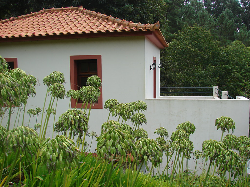 Casa oliveira 1491879, Holiday house in Madeira-Camacha, Madeira, Portugal for 2 persons...
