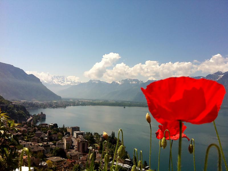 Flaminia 1486670,Cuarto de hotel en Montreux, Vaud, Suiza para 3 personas...